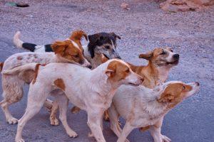 OBAVIJEST Kontrola čipiranja pasa